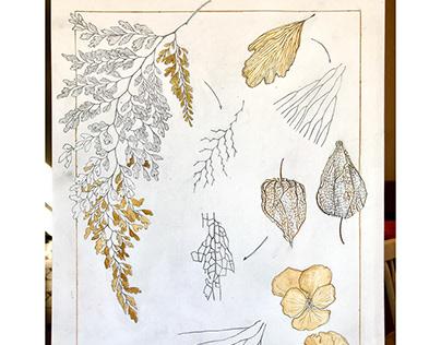 Botanical Illustration Branching Strategies