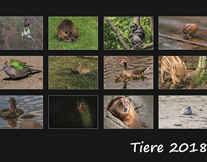 Tiere 2018
