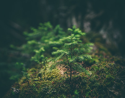 5 Books On Environmental Conservation