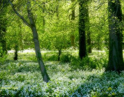 Linschoten spring, visual poetry
