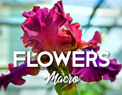 Flowers Photoshot