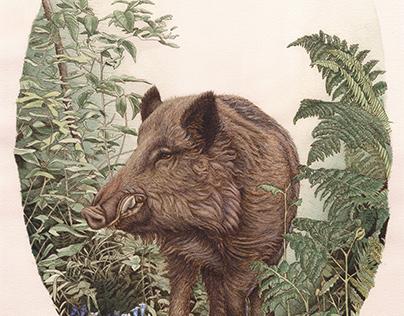Wild Boar with Foliage