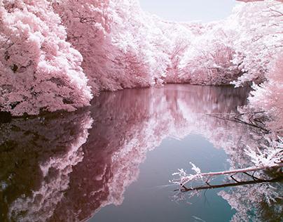 infrared photography -kamakura-