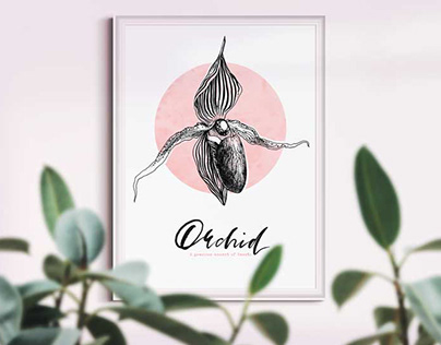Orchid. A precious moment of beauty. Wall art poster.