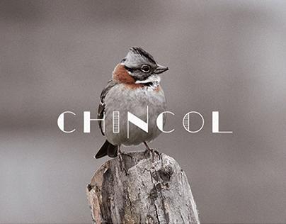 Chincol