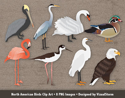 North American Bird Illustrations