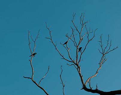 At Cliff's Edge - Varkala Photo Series
