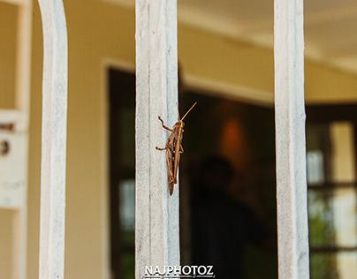 Photo Album-(grasshopper ting)