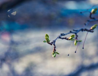 Blue Morning Light