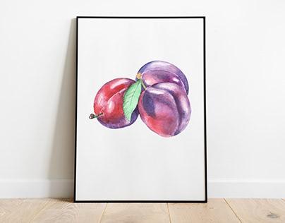 Watercolor plums