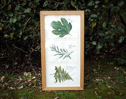 Herbier à l'encre / figuier, olivier, fougère
