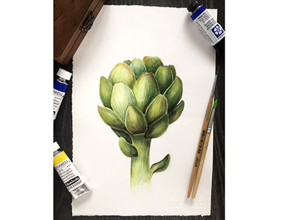 Artichoke. Watercolor Botanical illustration.