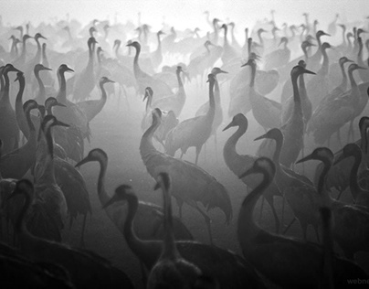Birds Black and White Photography