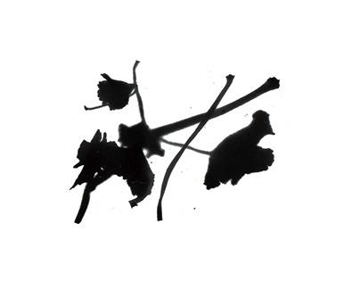Plant leftovers monogram