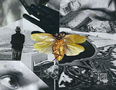 Collage #1. Troubles: little and not really