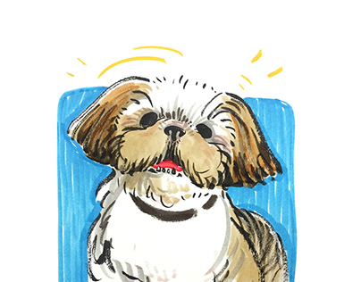 Plentiful Pet Portraits