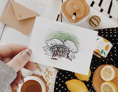 Cacao illustré