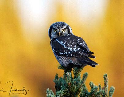 Alaska - Birds