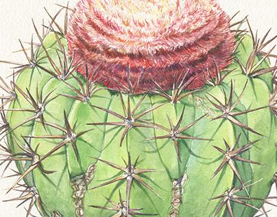 Cacti in Watercolor