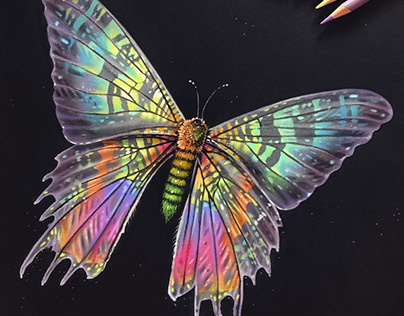 Colorful Moth & Jellyfish Studies