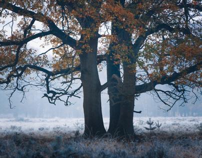 Autumn in Overijssel