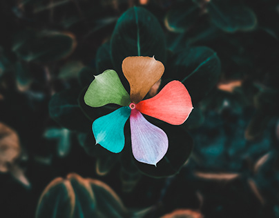Colourfull flower editing