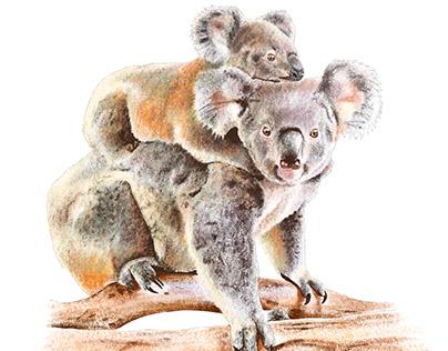 Australian Animals 2020
