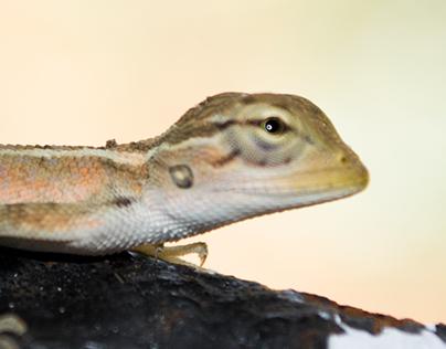 Project Lizard