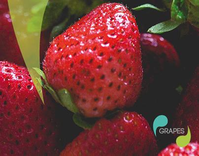 Grapes // Brand