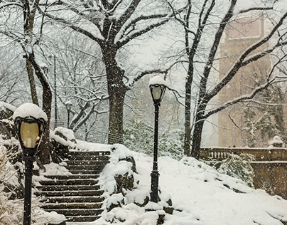 A Snowy Walk in Central Park