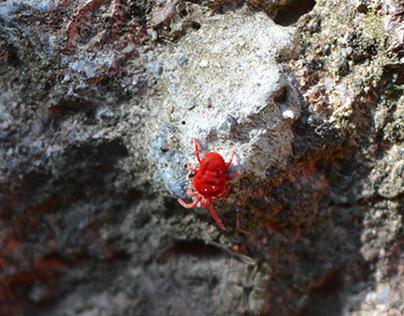 Tiny Universes (Photography)