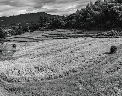 September weather (Southern Nara North Wakayama)