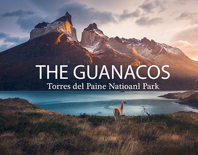 The Guanacos, Torres del Paine
