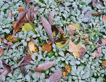 First frosts