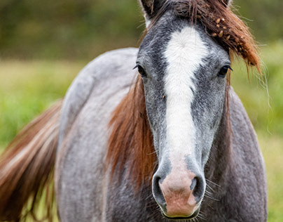 Wild Horses of Missouri