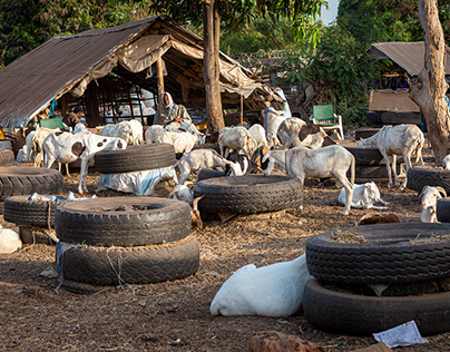 Animal Market, Gambia
