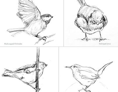 Scientific Studies of My Backyard Birds