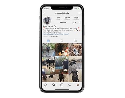 Rhino Pet Instagram Account - Growth and Management