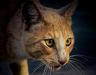 Gatos de Guayaquil