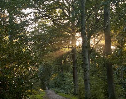 Sherrardspark Wood, Welwyn Garden City, England