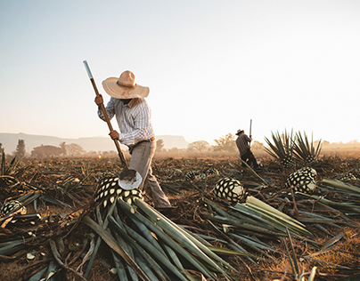 The raw gold of México: Tequila.