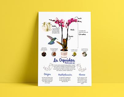 Orquídea / Infografía