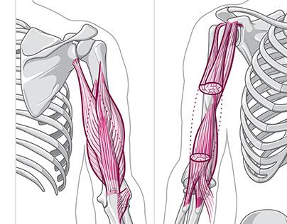 Anatomie en bichromie