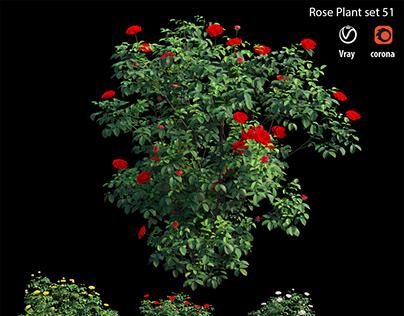 Rose Plant set 51