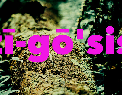 Zygosis | composition
