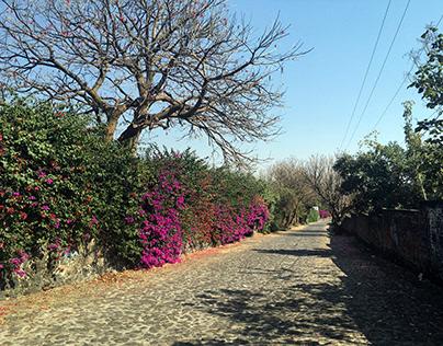 México VIII