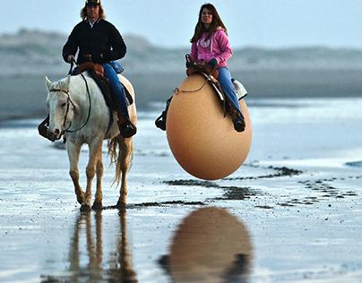 Egg Hourse