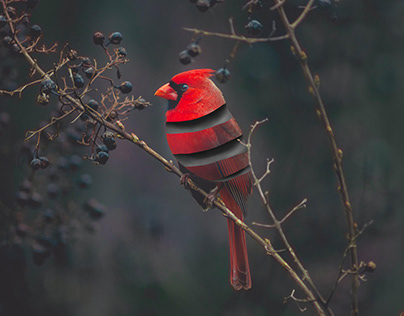 Cardinal Bird Unraveled