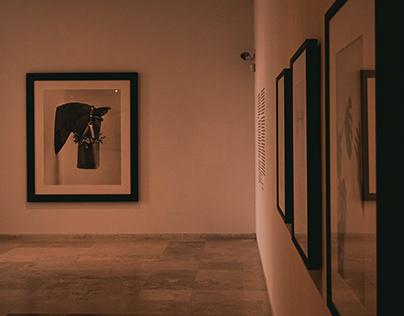 Chema Madoz exposición Museo Patio Herreriano.