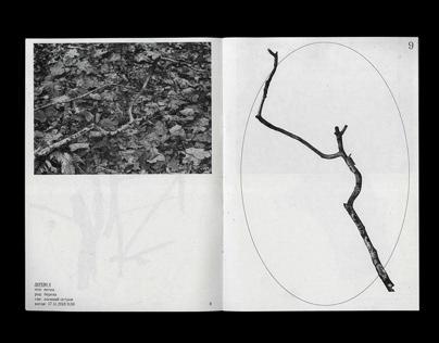 ОПЫТ ОБЩЕНИЯ: поиск жизни и деятельности дерева